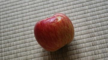 りんごごろごろ-2.JPG