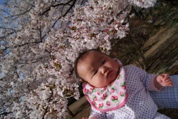 春の日1.JPG